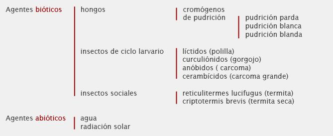 Patologías de la madera, hongos y pudrición parda.